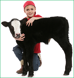 Boy with Calf